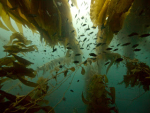 The Wide View: Diving the Channel Islands with the Olympus E-PL1 Micro Four Thirds Camera