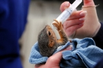 The Cute Factor: Volunteering at the California Wildlife Center